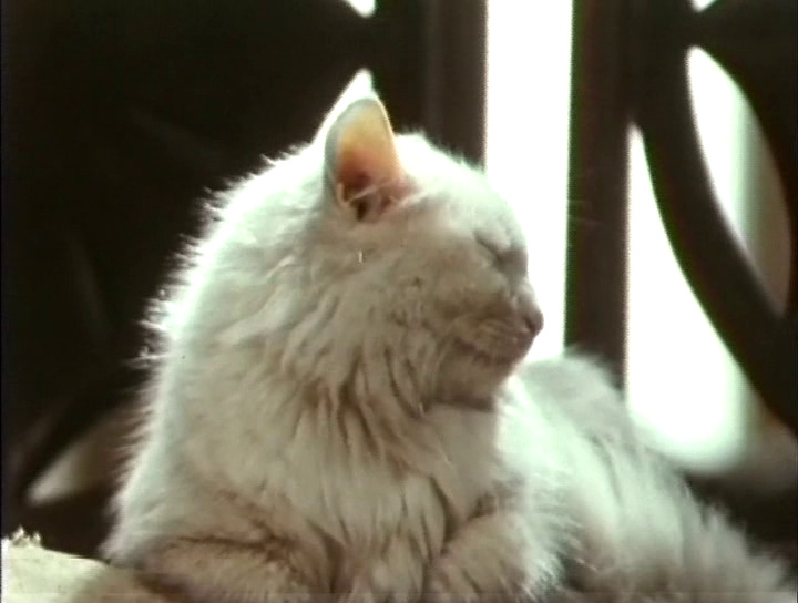 Взирать онлайн Каштанка(1975) .