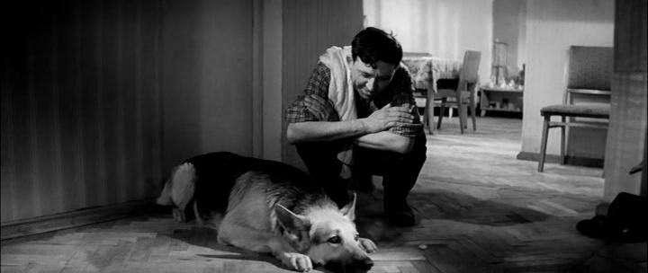 Ко мне Мухтар (1964) скачать торрент